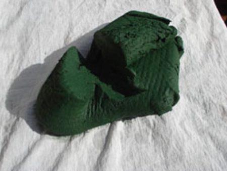 culture spiruline auroville ferme de paula