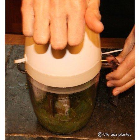 aloe arborescens feuilles fraiches cure entretien