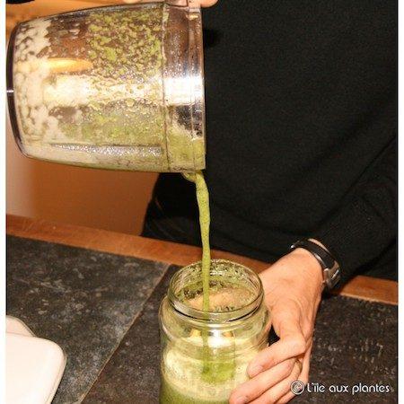 aloe arborescens feuilles fraiches cure entretien miel